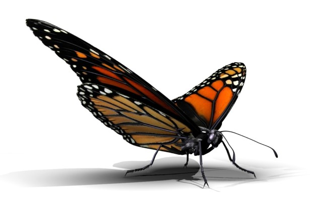 ButterflyRender11