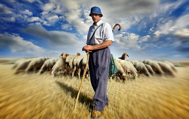 shepherd blog